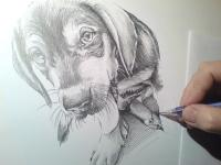 Jezevčík štěně - kresba tužkou
