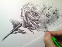 Myšák zahradník - perokresba