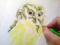 sova  perokresba, pták, noční pták