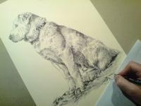 Středoasijský pastevecký pes