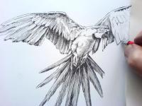 ARA papoušek