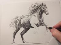 Kůň foto