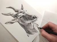 Antilopa losí - perokresba