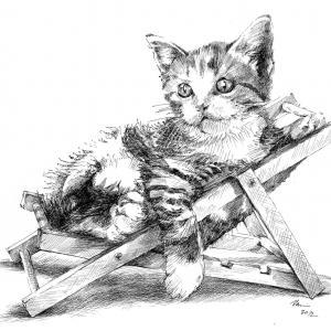 Odpočívající kotě - kresba