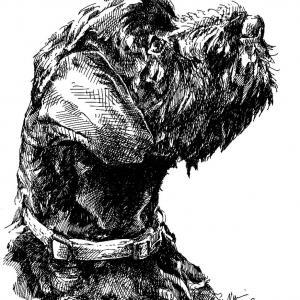 Knírač, pes