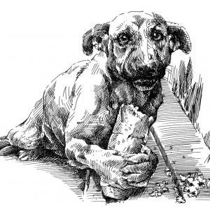 Pes a hlad