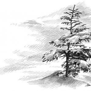 Zasněžený strom