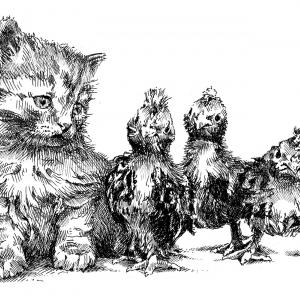 Kotě a kuře