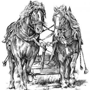 koně v zápřahu - kresba