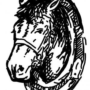 Hlava koně