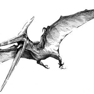 Pteranodon, ještěr, prevěk