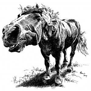 frajer koník