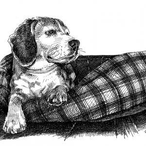Besinka - Beagle