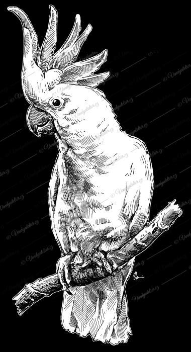 Kakadu žlutolící