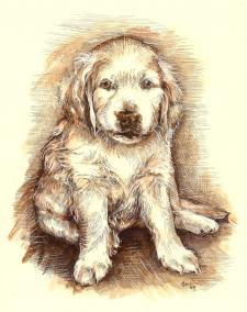 Retrívr - vodící pes