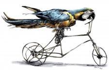 Cvičený papoušek