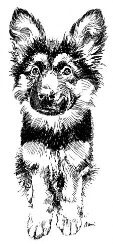 Německý ovčák - štěně