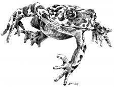 Žába, frog
