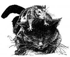 Kočka a myš