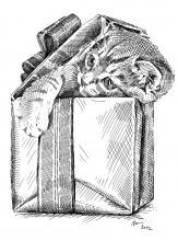 hrající se kotě, koťátko, kočka, dárek, překvapení