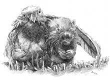 přátelství zvířat, pták a křeček