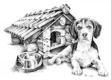 Beagle u boudy