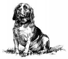 Beagle Máňa