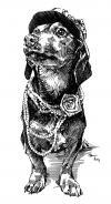 Pes na bále