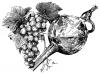 Víno - koštýř
